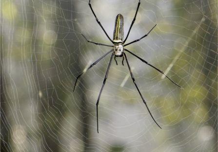 Muzyka pajęczych sieci