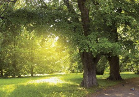 Kilka sposobów jak ratować drzewa