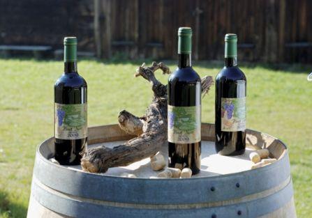 Wino z Ochli