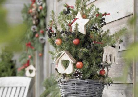 Żywa choinka: jakie drzewko wybrać ?