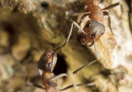 Mrówka zimą