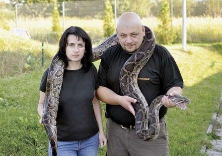 Pan od węży