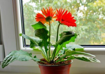 Kwiatki same w domu