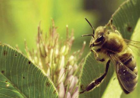 Poznajemy życie pszczół