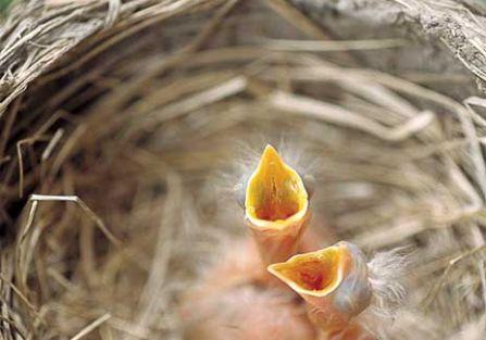Ptasie pisanki z natury