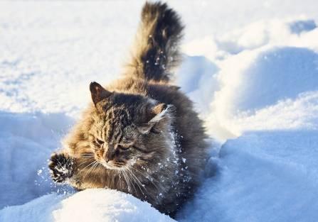 czy koty marzną zimą
