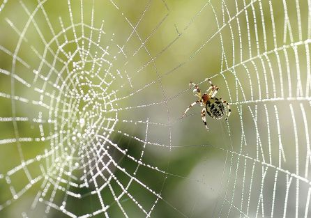 Dobry sąsiad pająk