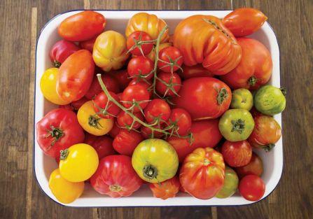 Projekt pomidor