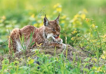 fauna biebrzańskiego parku narodowego