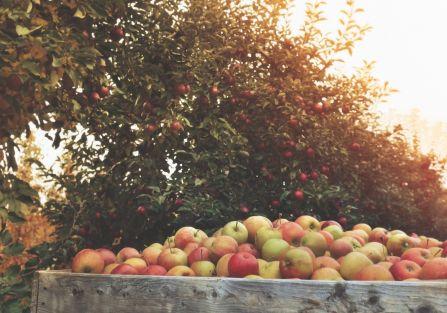 kiedy sadzić drzewka owocowe