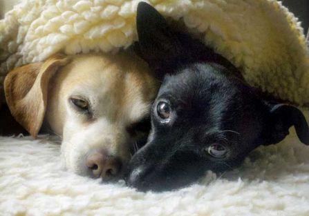 Jak wybrać miejsce na psie legowisko?