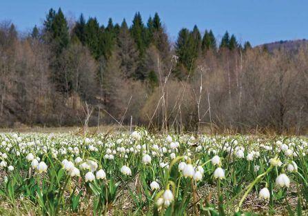 Widzieliście taką śnieżycę wiosenną?