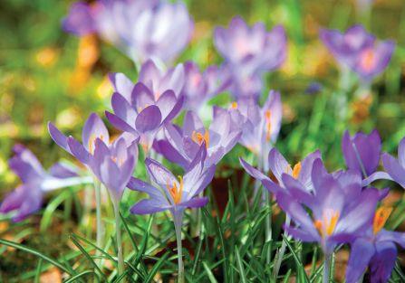 Dlaczego czuć wiosnę nosem