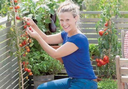 Dlaczego warto sadzić bazylię koło pomidorów?