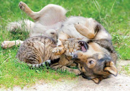 Jak oduczyć psa złych nawyków