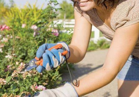 Prace ogrodowe na czerwiec