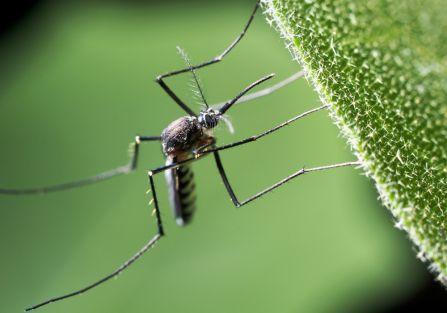 Naturalny środek na komary