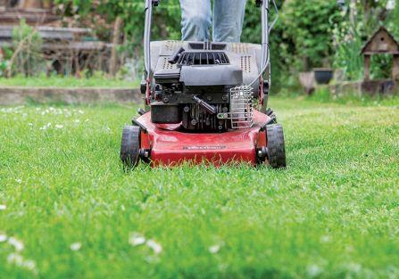 Jak pielęgnować trawnik