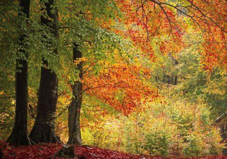 Przysłowia na wrzesień