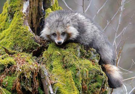 Egzotyczne zwierzęta w Polsce - gdzie je spotkasz?