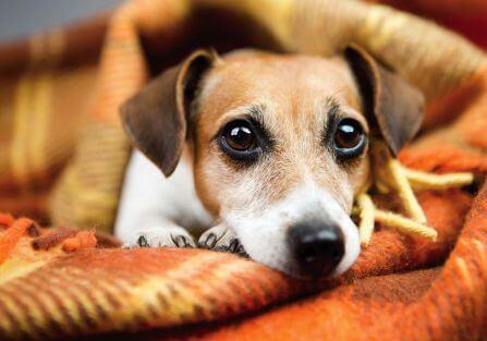 Jak poznać, że psa coś boli?