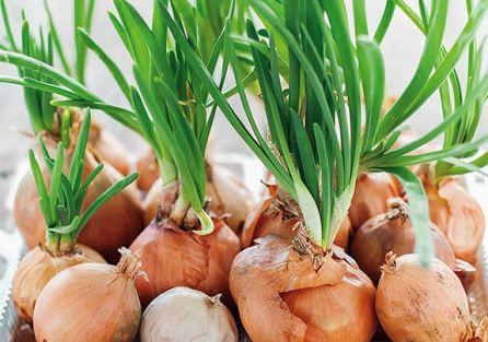 Domowa uprawa ziół i warzyw