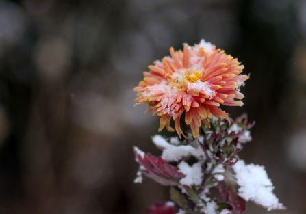 5 pomysłów na jesienne porządki z kwiatami
