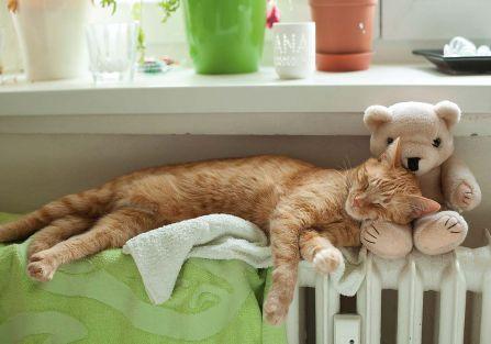 Za co kot nie lubi zimy?
