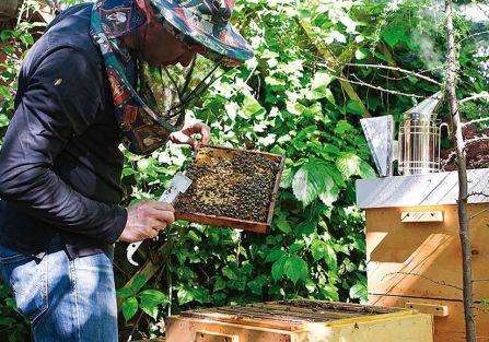 Miejskie pszczoły – jakie korzyści przynoszą miejskie pasieki?