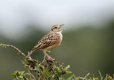 jakie ptaki zwiastują wiosnę
