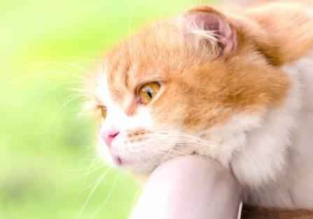 Czy koty tęsknią?