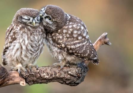 gody u ptaków