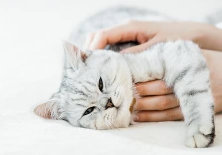 jak głaskać kota