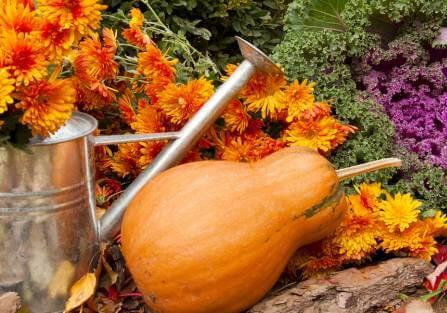 Wykopujemy byliny i przycinamy zioła. Zakładamy ogródek warzywny – odcinek siódmy