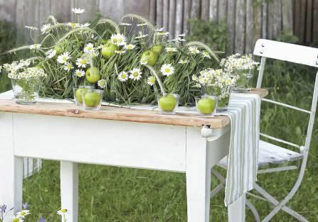 Margerytka – kwiat prosto z łąki