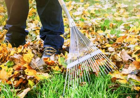 Chcesz mieć piękny ogród? Sadź koniczynę i nie zbieraj liści