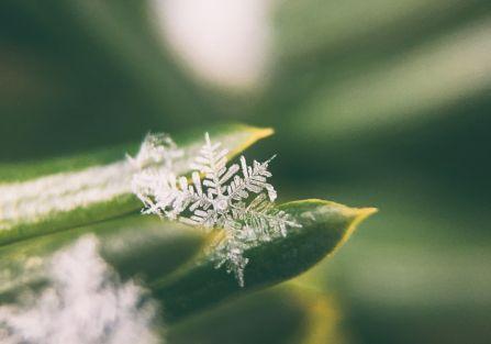 śnieg pod mikroskopem