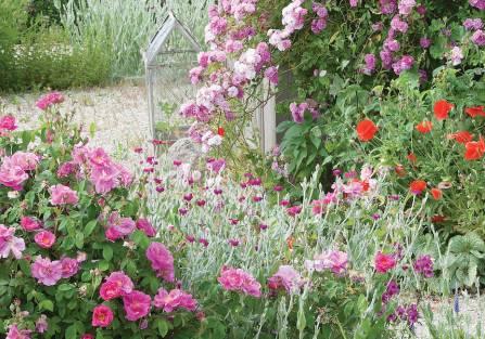Pachnące kwiaty do ogrodu