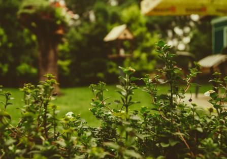 prace ogrodowe kwiecień