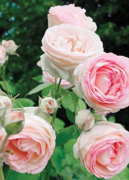 data/articles/Pachnące kwiaty do ogrodu