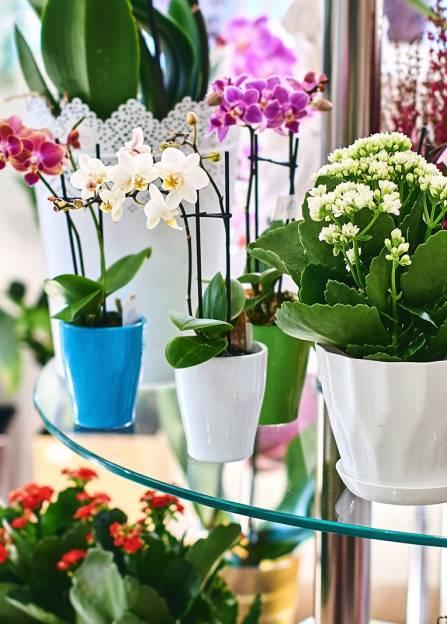 data/articles/Najpiękniejsze kwiaty doniczkowe do wnętrz