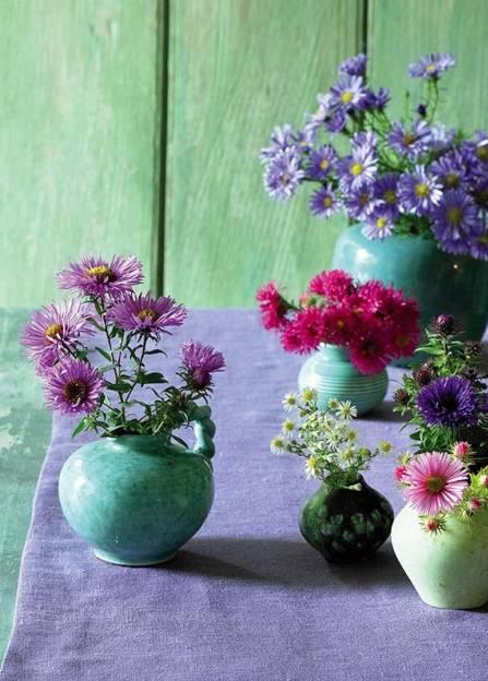 data/articles/Kolorowe astry marcinki – piękne, jesienne kwiaty