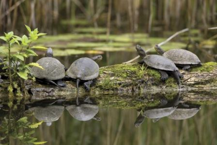 W pogoni za żółwiem