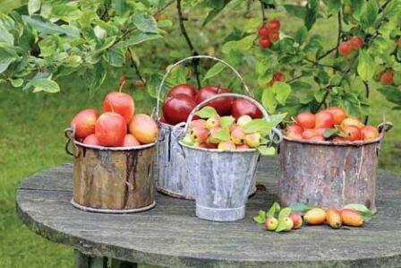 Jabłuszko na ciepło i zimno