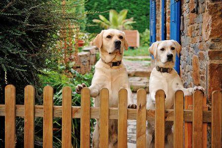 Jak oduczyć psa szczekania na gości?