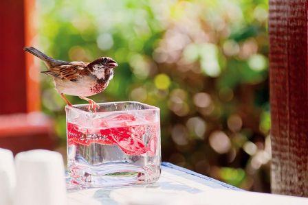 Dziel się wodą z ptakami!