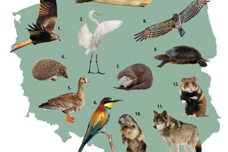 Piękne polskie zwierzęta