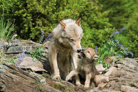 """Kochają i śnią – wywiad z autorem książki """"Duchowe życie zwierząt"""""""