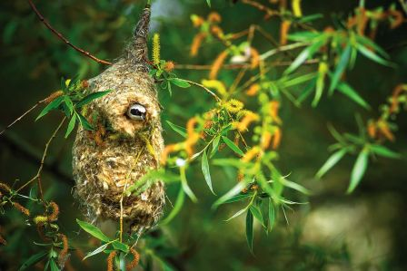 Jak ptaki budują gniazda?