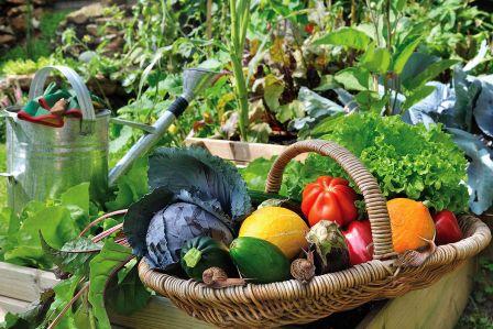 Sposób na urodzaj, plagę ślimaków i dłuższe życie kwiatów. Zakładamy ogródek warzywny - odcinek piąty